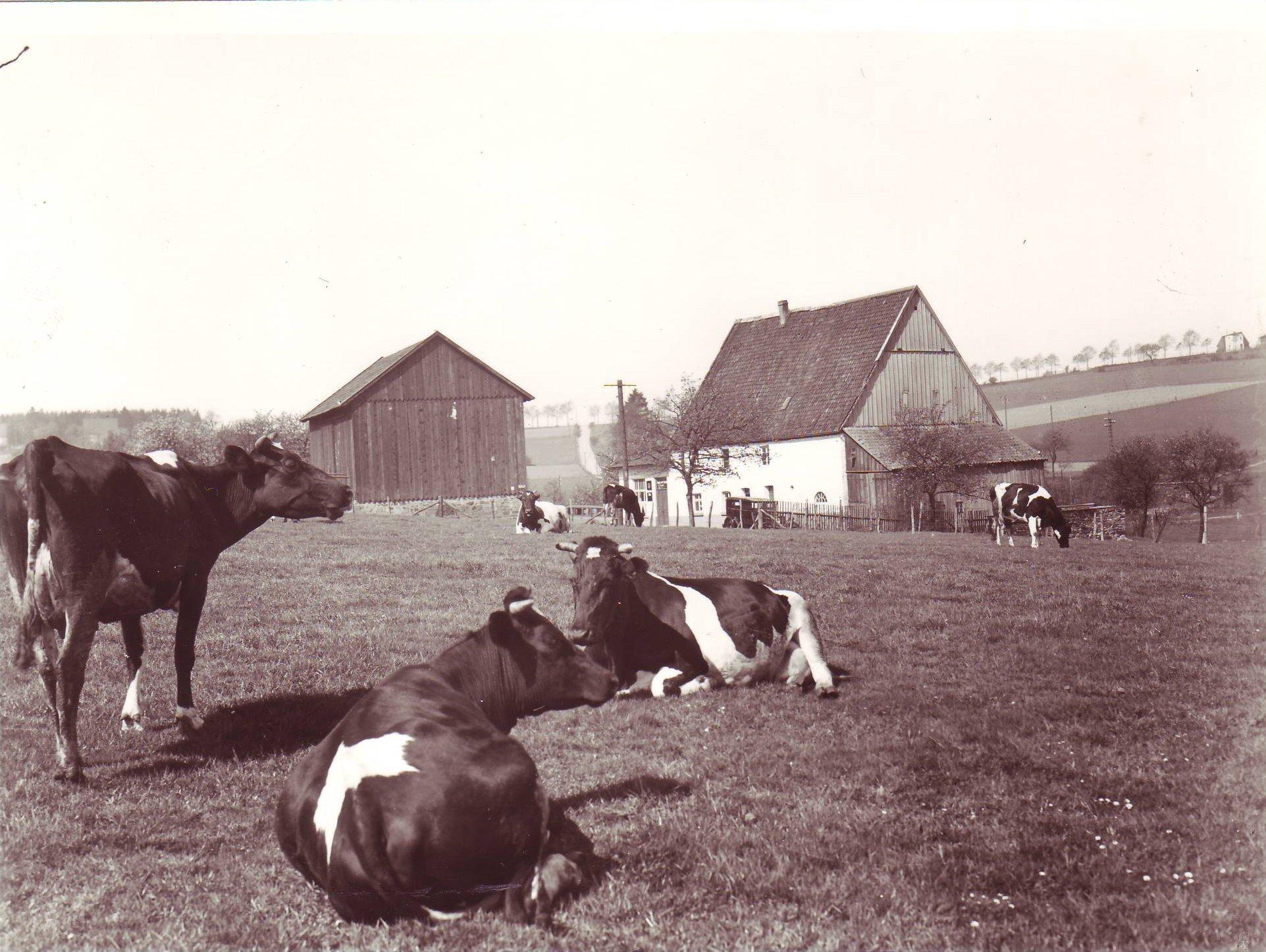 Poth Ehringhausen