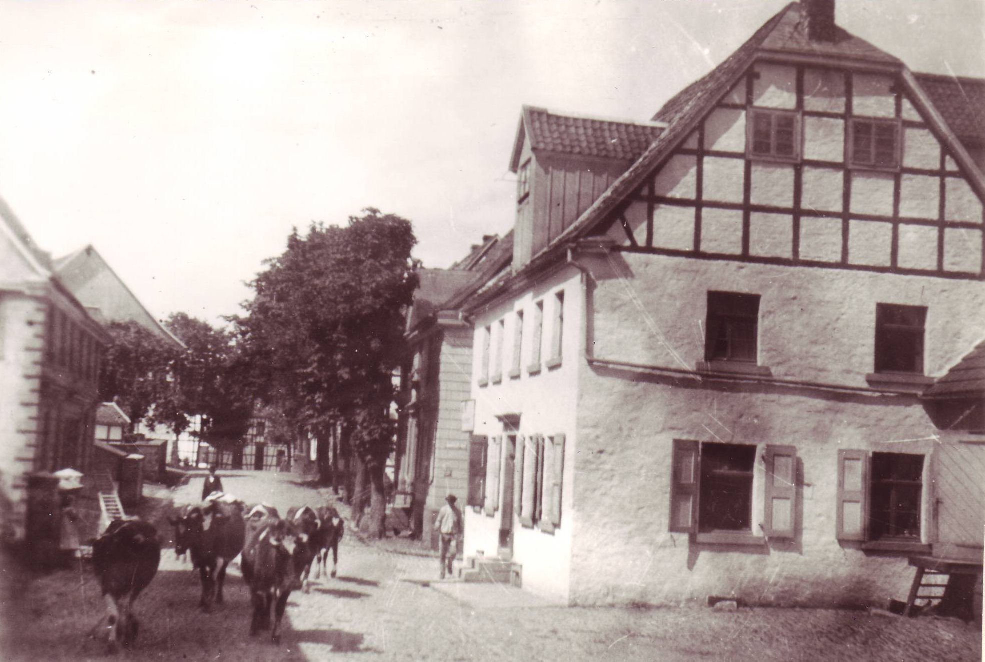 Denkmalstraße mit Kühen