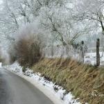 br-winter-show-030