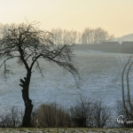 br-winter-show-176