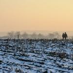br-winter-show-180