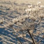 br-winter-show-231
