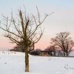 br-winter-show-240